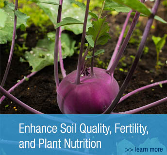 Biojuvant Enhance Soil Quality, Fertility, and Plant Nutrition